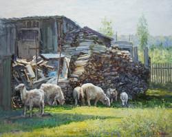 ,,Овцы у сарая,, х.м 40х50 2014г.