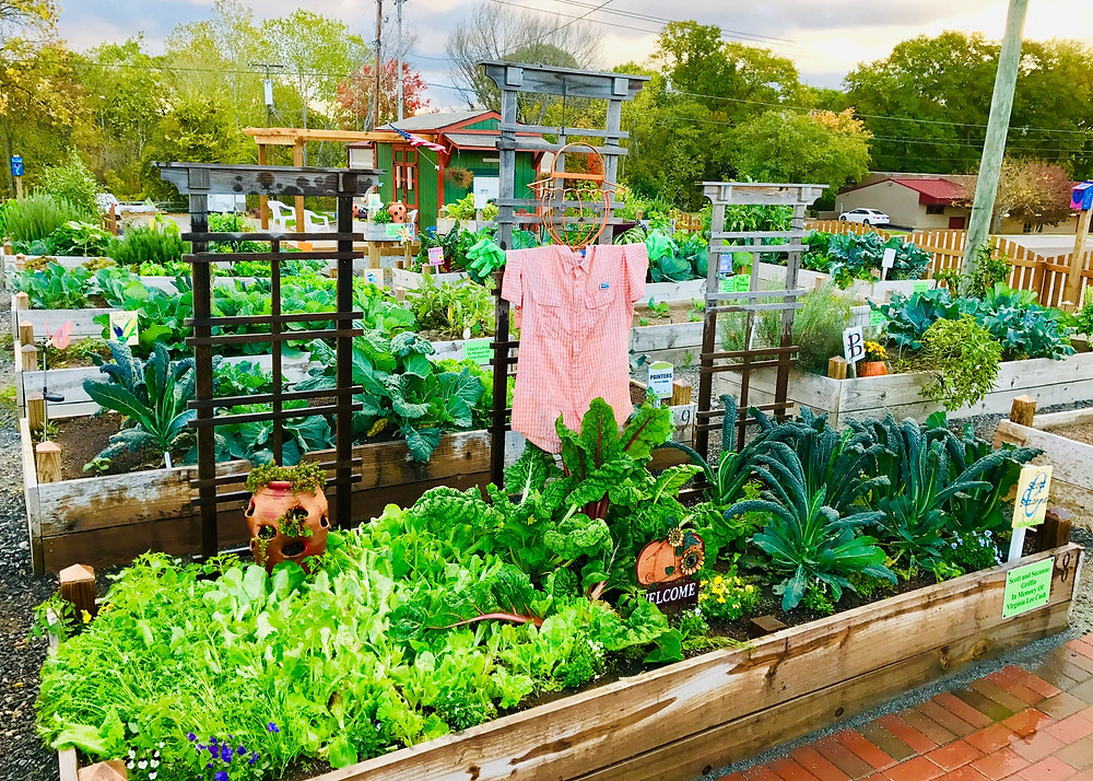 Mount Holly Community Garden