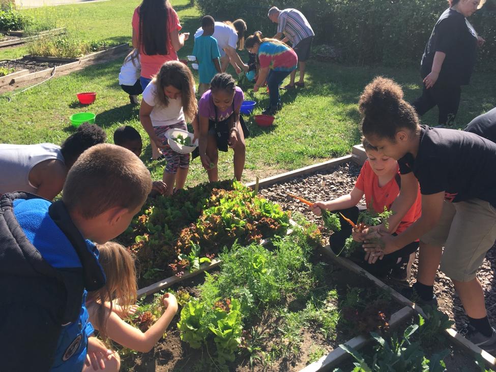 Healthy Harvest Program