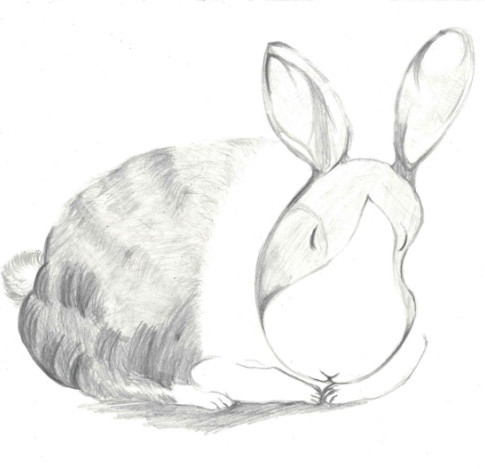 9歲, 7-9歲組別 – 季軍, 兔子