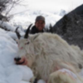 Miller's Outdoors | Hunting Camp in British Columbia, Canada | Coastal Mountain Goat Hunting