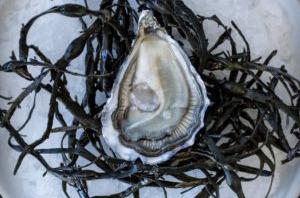 Algas Depuradas de Bretaña