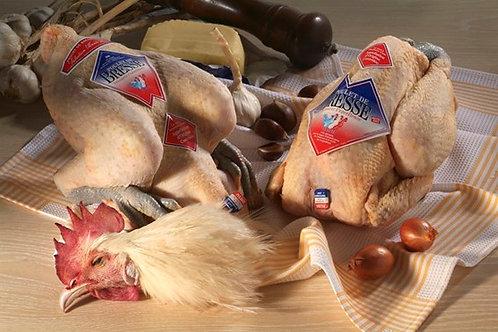 Pollo Hembra de Bresse A.O.P 1.4/1.7kg
