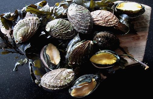Abalone Salvaje de Bretaña