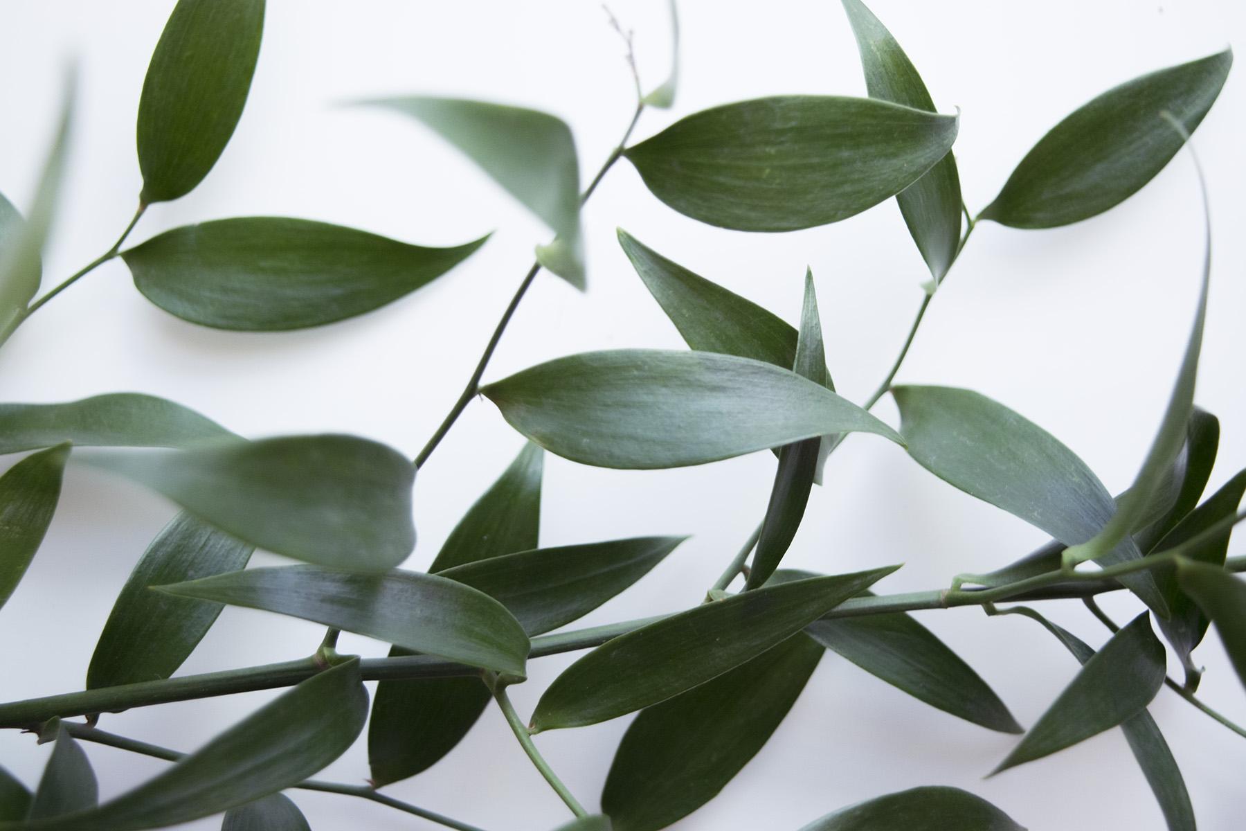 Plant01.1