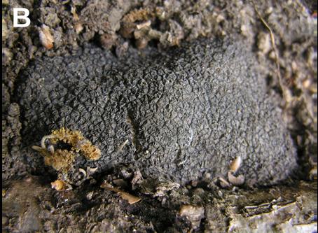 Qu'est-ce qu'un champignon ?