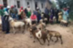 rwanda-umc-1-sheep.jpg