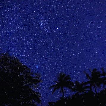 ヤシの木とガジュマルと星空_ガジュマルにはキジムナーが住むと言われております。_