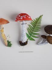 Edible and Poisonous Fungi (2018)