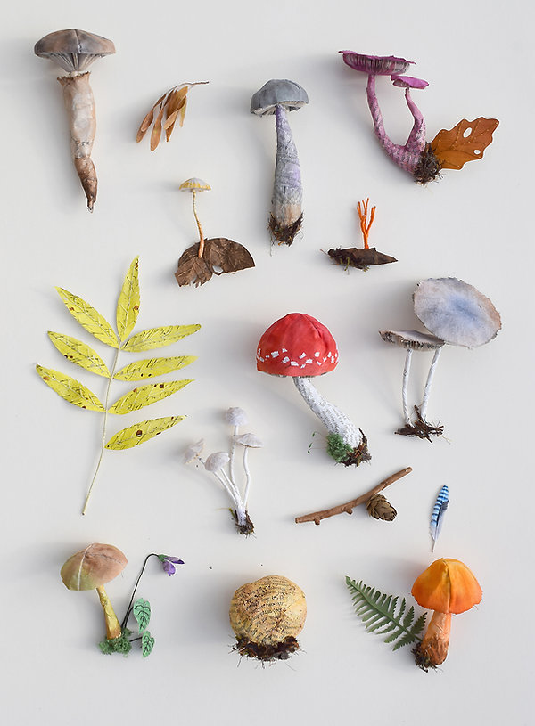 Woodland Collection, paper, plant, fungi, mushroom, insect, butterfly specimens by artist Kate Kato | Kasasagi