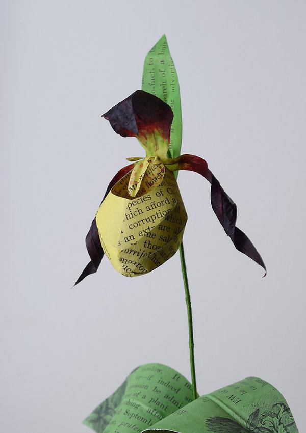 Ladys slipper Orchid, a botanical sculpture, paper flower by artist Kate Kato | Kasasagi