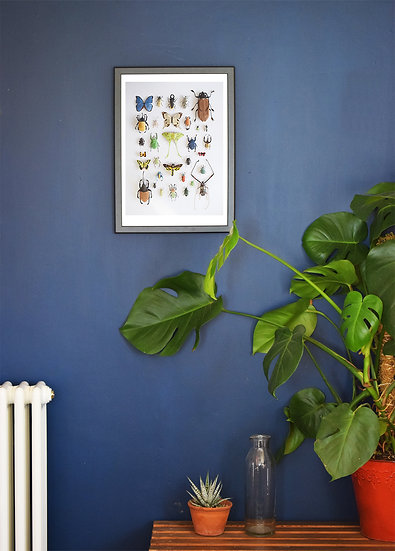 Entomology - A3 Limited Edition Print