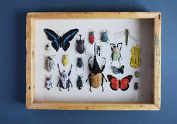 bug frame1