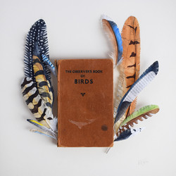 Feather Book 2