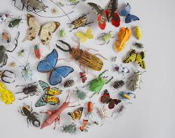bug circle 2a