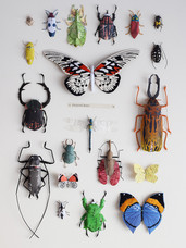 7. Collecting Insects............. 24. (2017)