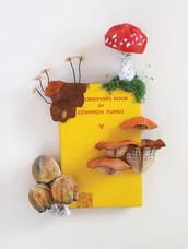 The Observer Book of Common Fungi (2017)