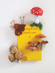 The Observer Book of Common Fungi (2017)