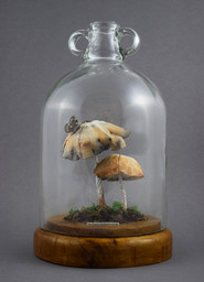 Parasol Mushrooms (2016)