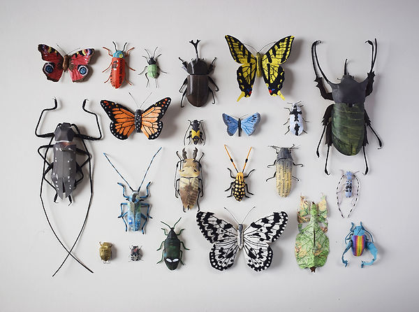 Paper insect collection, entomolody display, bugs and butterflies by artist Kate Kato | Kasasagi