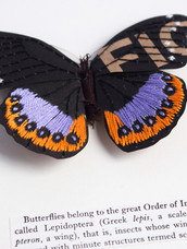 Butterflies belong to the great order of insects..... (2017)