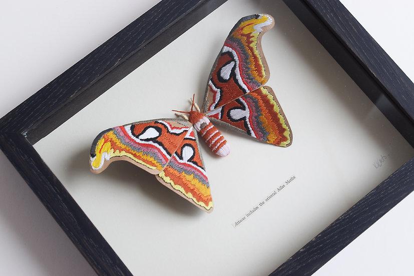 'Attacus Includes the Oriental Atlas Moths' | 2019