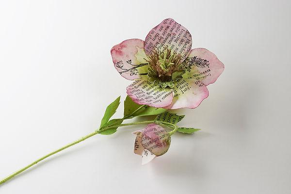 Helebore, a botanical sculpture, paper flower by artist Kate Kato | Kasasagi