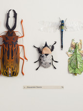 Collecting Insects ......... 84 (2017)