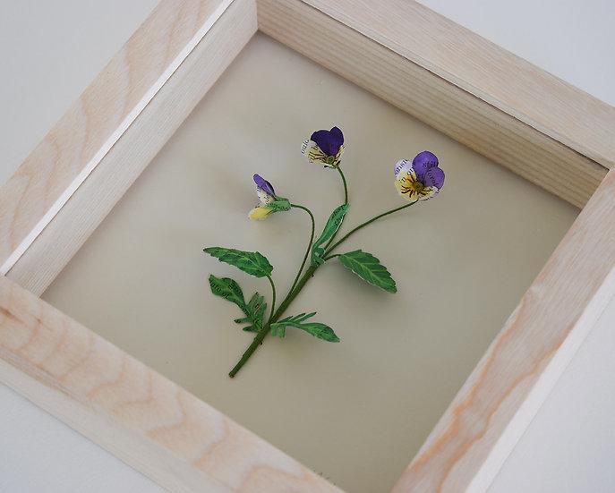 Viola Tricolor (Wild Pansy) | 2021