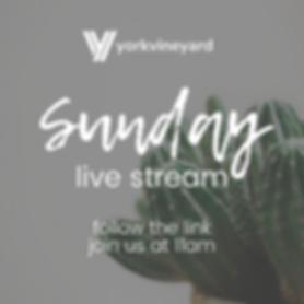 Live stream sunday.png