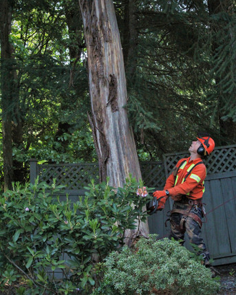 Tree Removal Vancouver Island