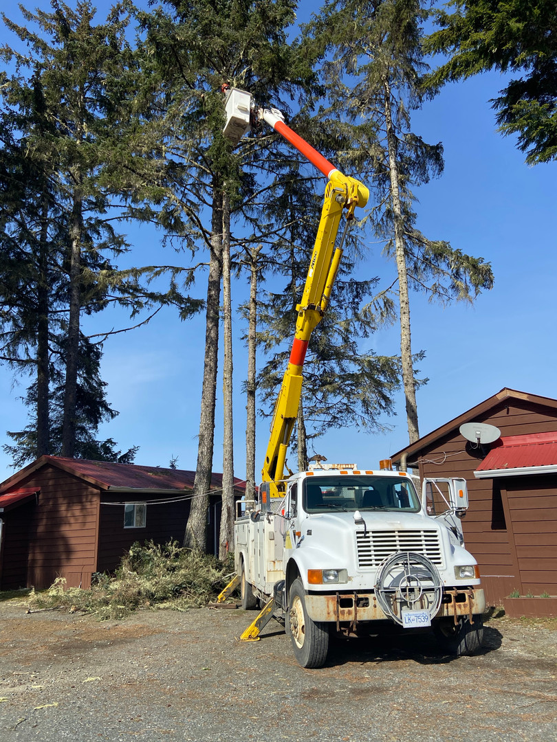 Vancouver-Island-Tree-Removal