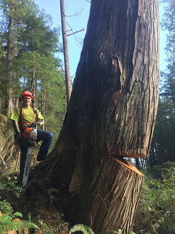 BC Tree Removal.jpg