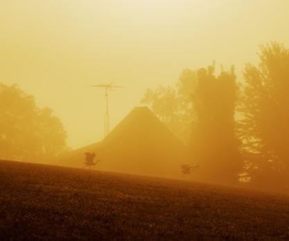 Sandhill Cranes in Morning Fog