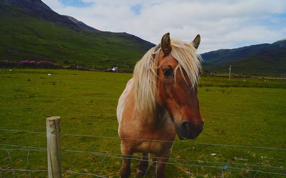 Horse Near Castle Moy.  2019.
