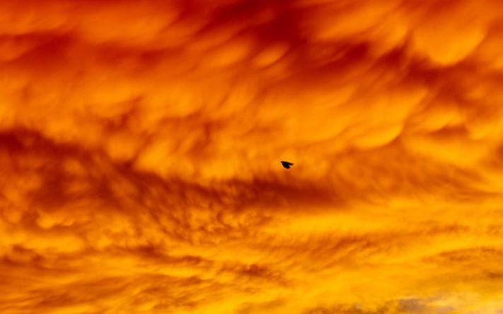 Bird Under Orange Cloud.  2019.