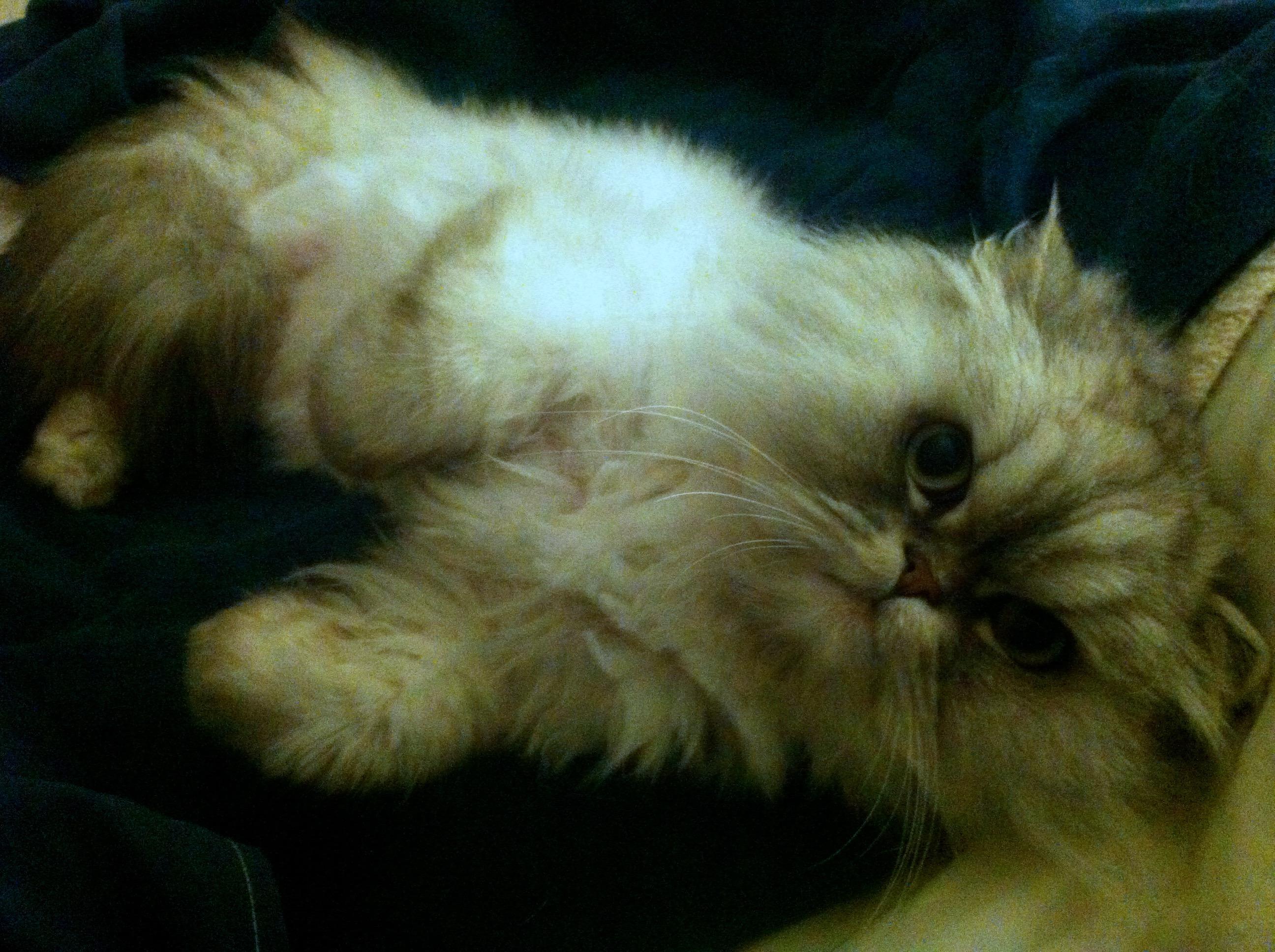 Tsar cat