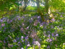 Orkney Flowers.jpg