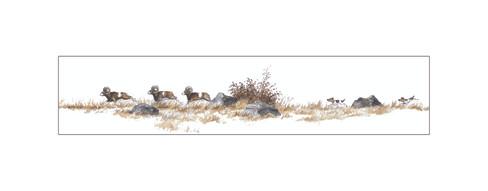 COURSE POURSUITE - Fox & Mouflons