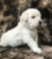Falon pup Dec 2019.jpg