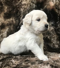 Falon pup Dec 2019.jpg