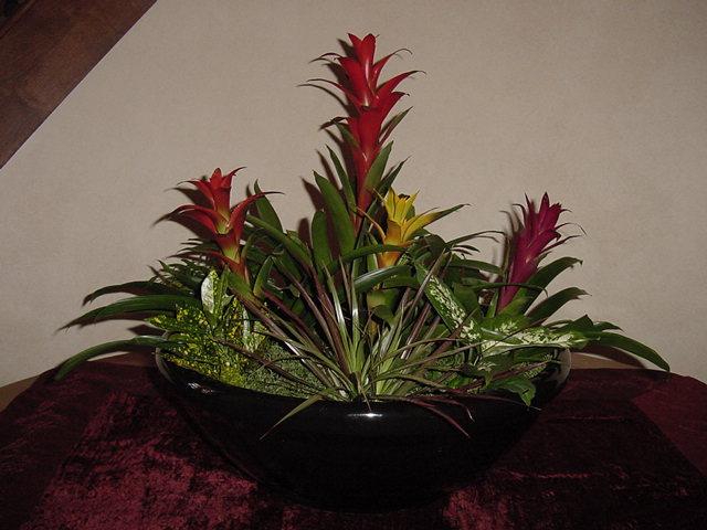 Flowerbowl Bromeliads