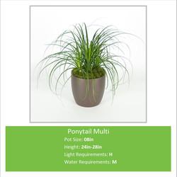 Ponytail_Multi_08inE