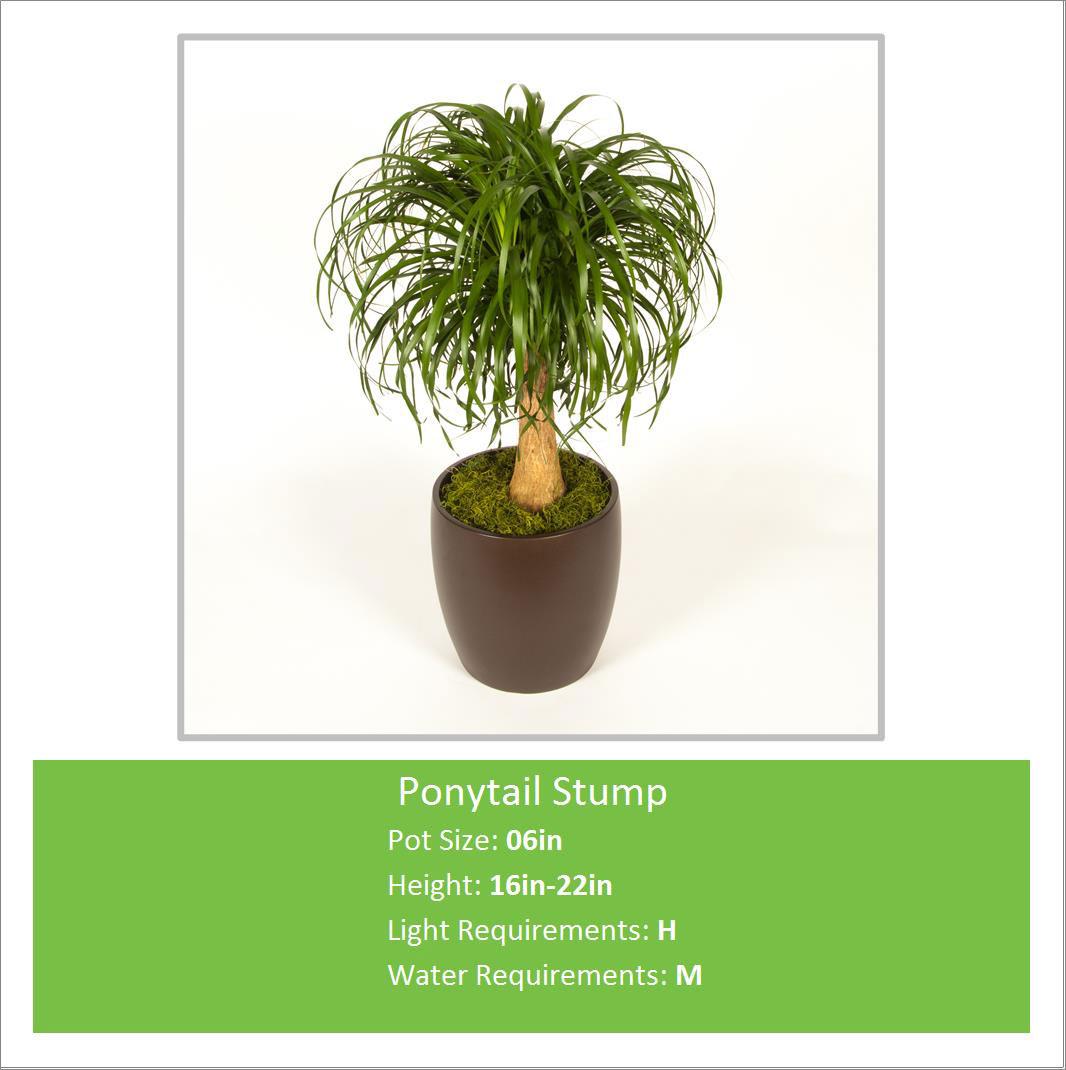 Ponytail_Stump_06inE---Copy