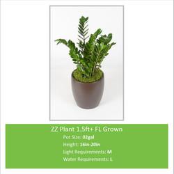ZZ_Plant_15ft_FL_Grown_02ga