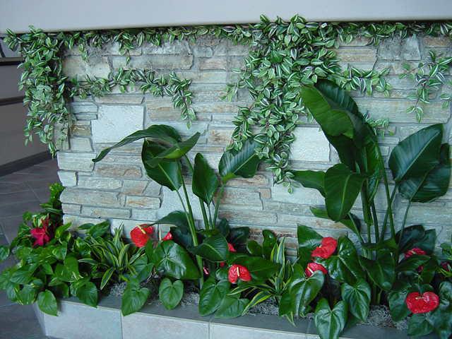 Plant Scape 1