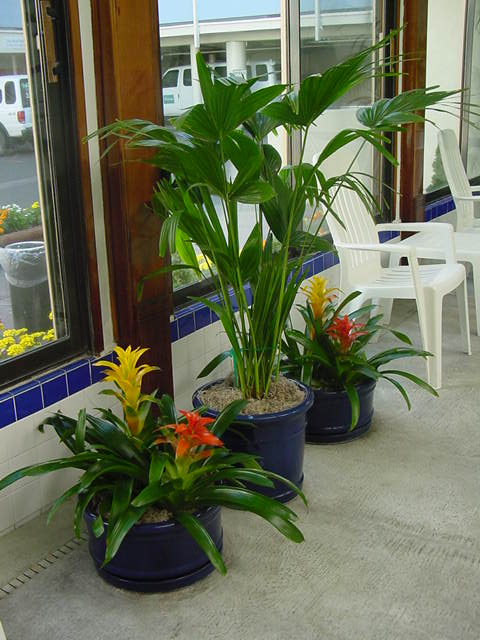 Colorful Bromeliads with Palm
