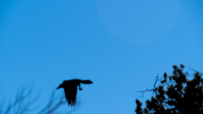 Sedona - Bird Flying.jpg