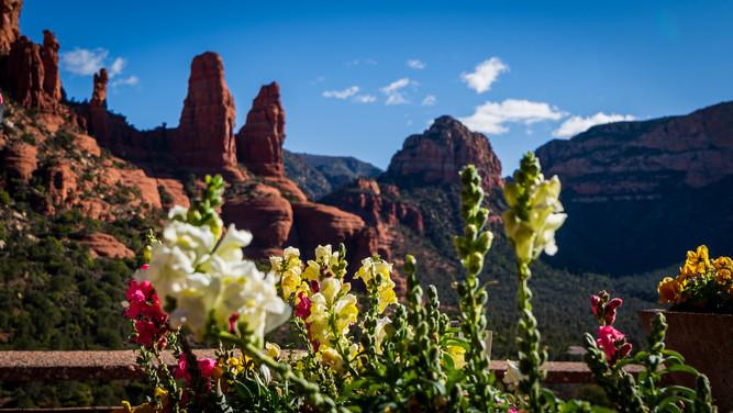 Sedona - Flowers.jpg
