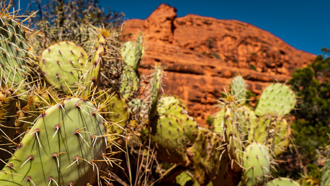 Sedona - Prickly Pear Cactus.jpg